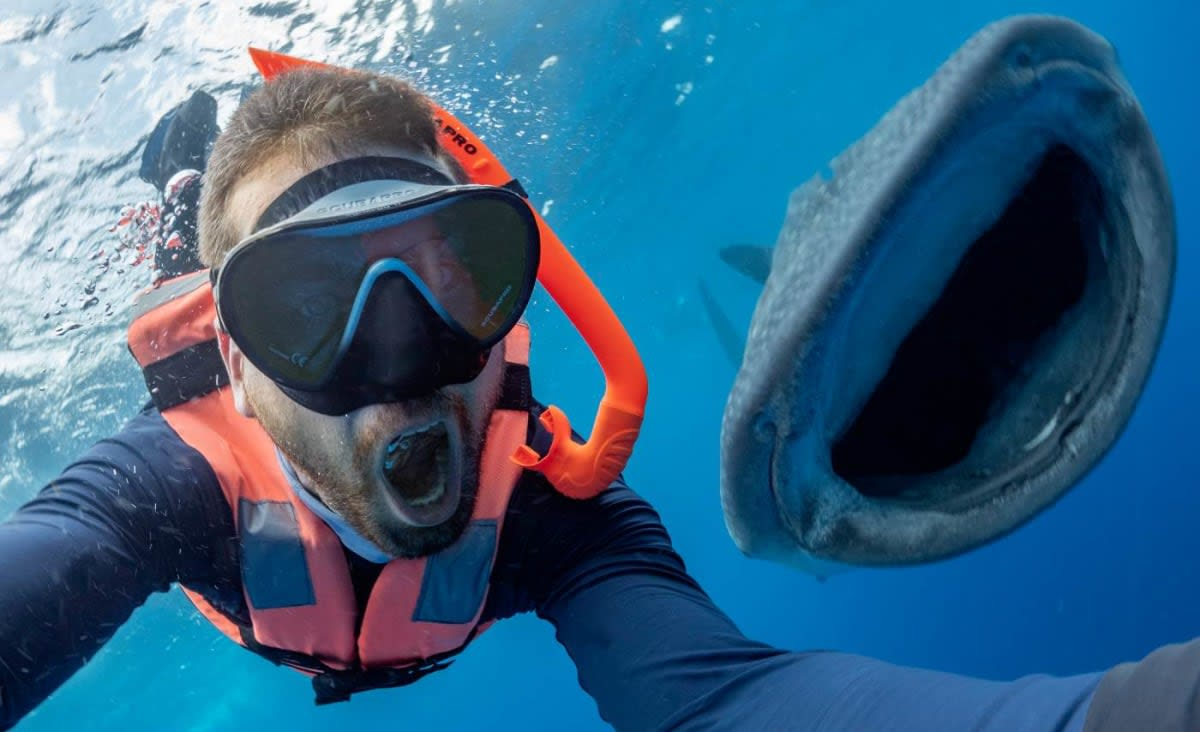 See the Moment a Shark Appears to Pose for a Selfie With a Diver, and Crack the Same Huge Smile