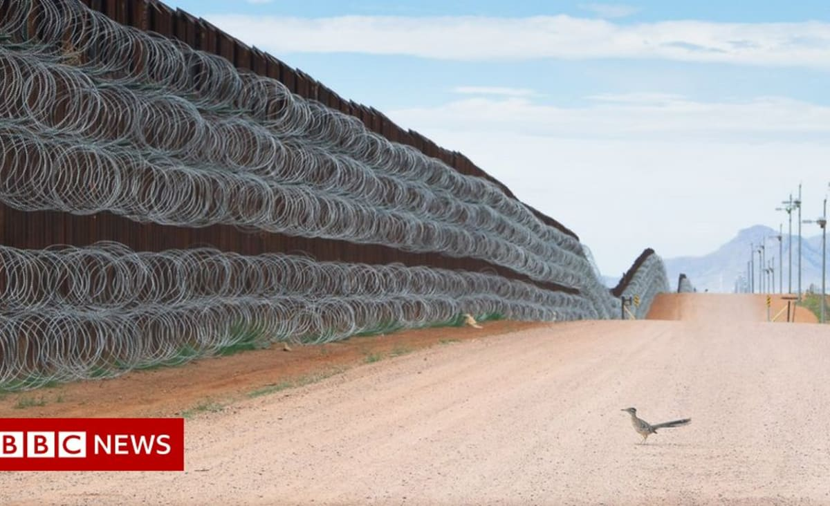 Image of bird at US-Mexico border wall wins contest