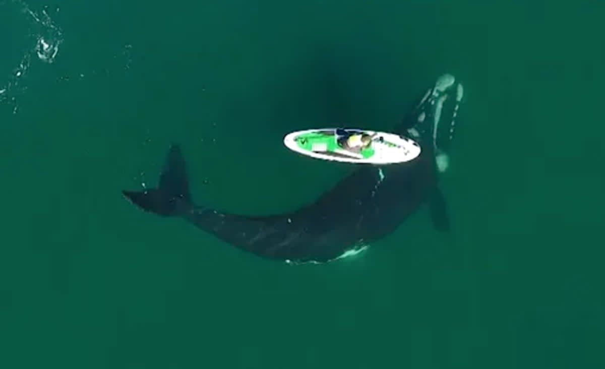 Curious Whale Nudges Paddle Boarder in Argentina in Stunning Video (WATCH)