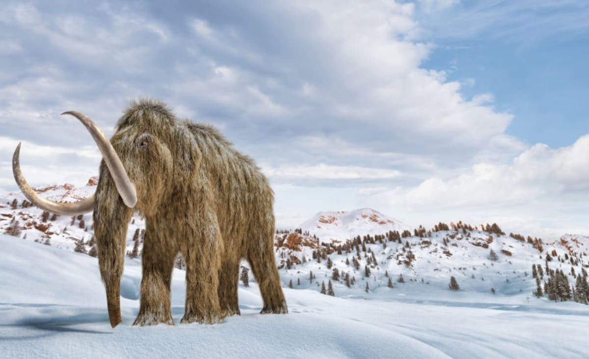 Can De-Extinction Bring Back the Woolly Mammoth?