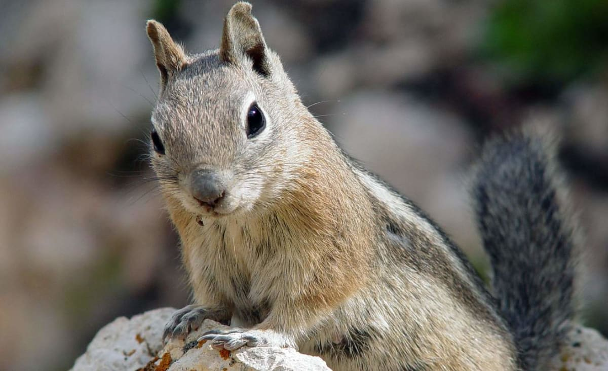 Squirrels Have Very Different Personality Traits – Just Like Humans