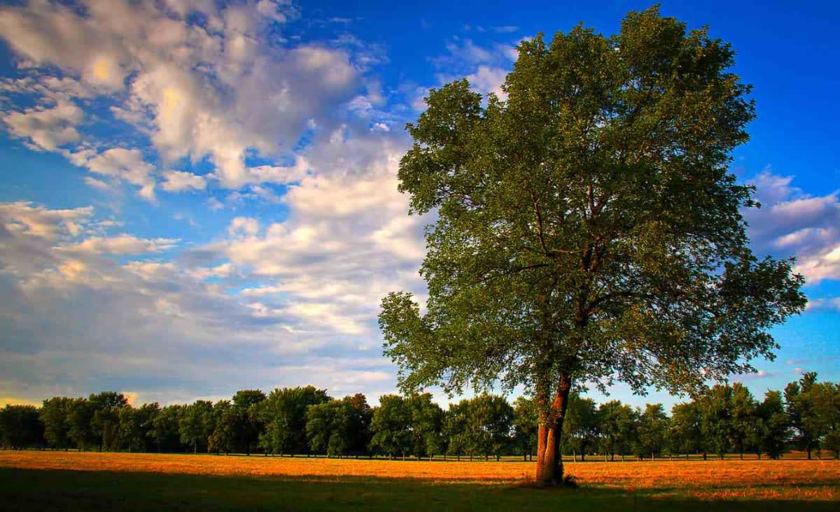 Mature Trees Will Increase CO2 Absorption By a Third in Response to Raised Levels on Earth, Study Shows