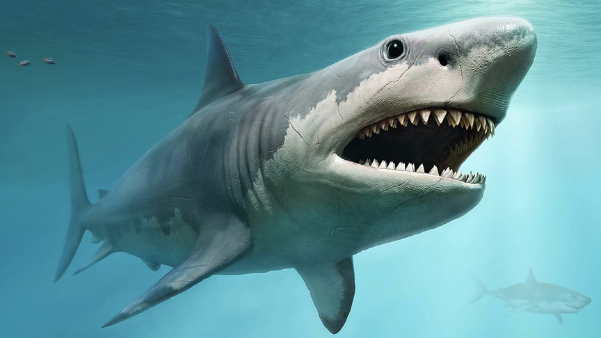 Ancient Shark Megalodon Grew So Big by Eating Their Siblings in the Womb