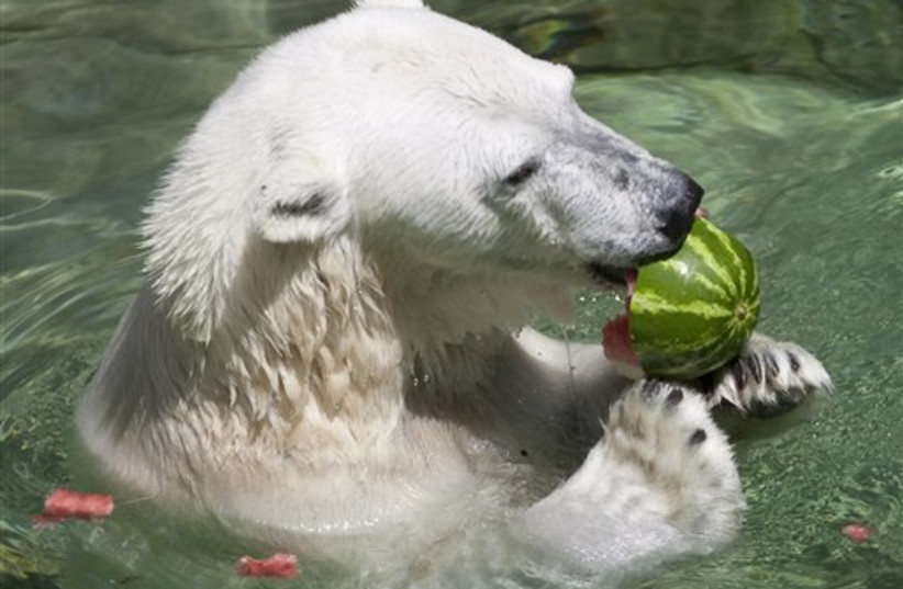 Female polar bear killed by male bear at Detroit Zoo