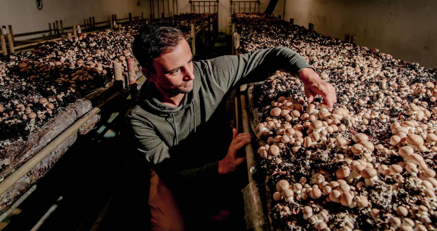 Paris is Turning Its Dark Underground Parking Lots into Mushrooms Farms