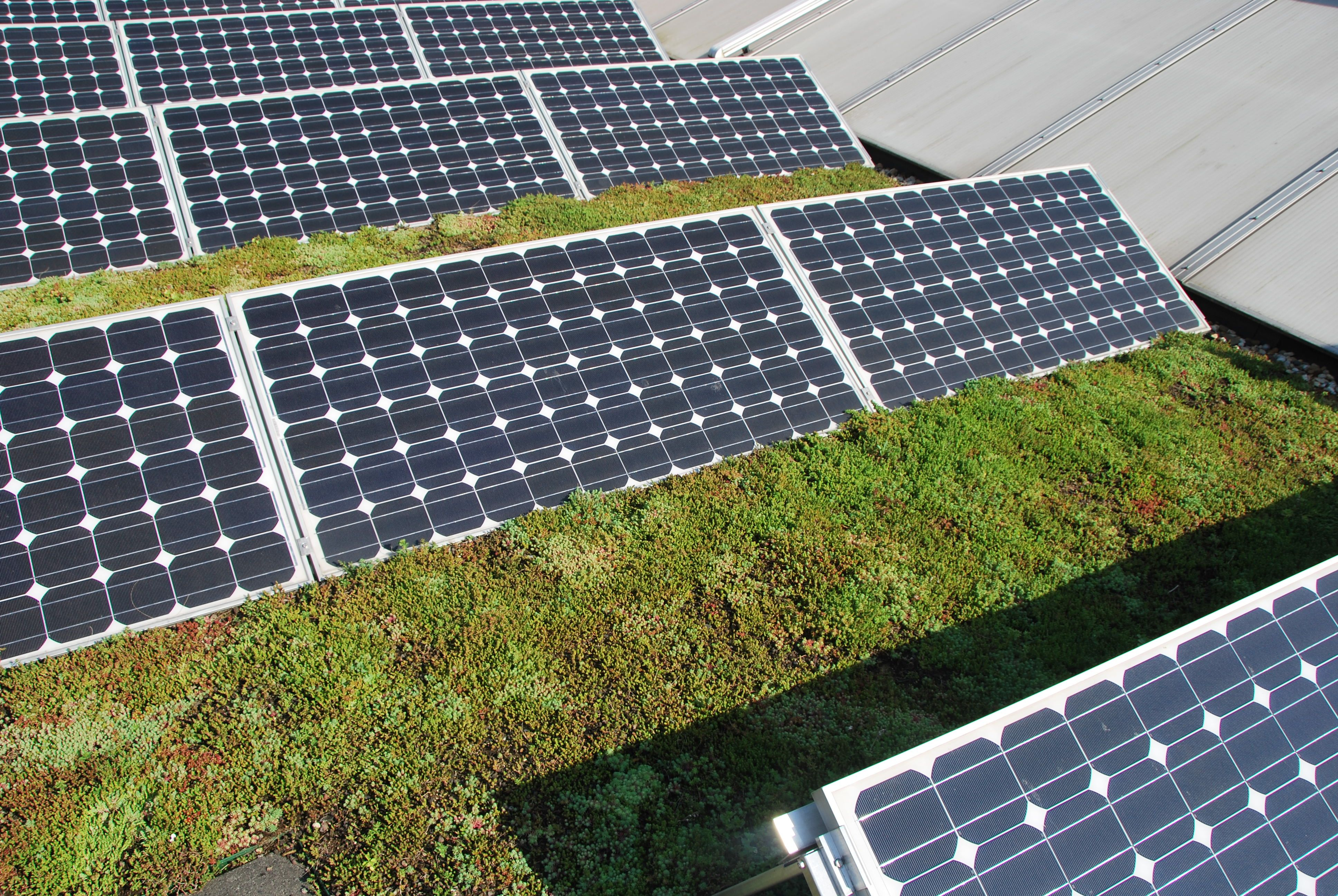 Afbeelding nieuws item Zonnepanelen op groen dak leveren hoger rendement