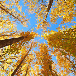 2016 Pulte Stock Images, SeasMain_207_Fall; Autumn trees and sky