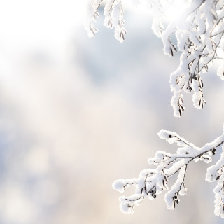 2016 Pulte Stock Images, SeasMain_208_Winter; Winter branch covered with snow