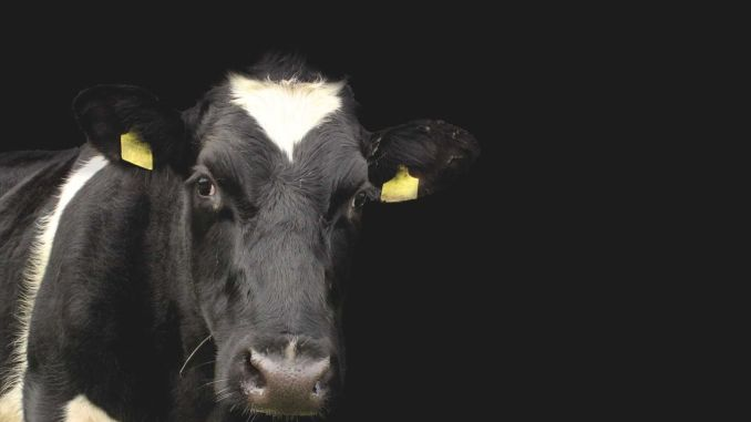 náhrada-mléka