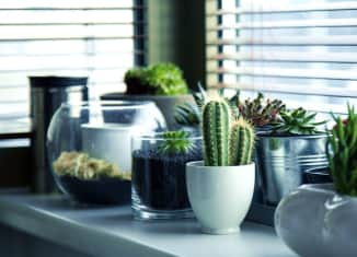 pokojové rostliny na parapetu