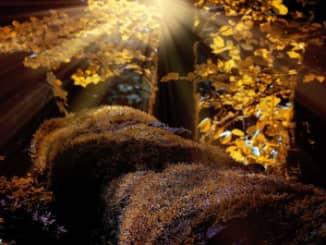 Podzimni krajina