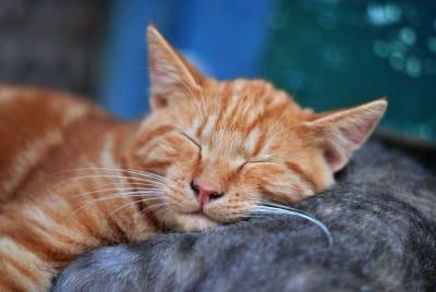 01_cat_ady7am