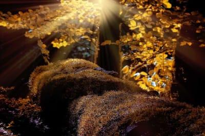 prirodni-podzimni-vyzdoba-nahled_y9dywp