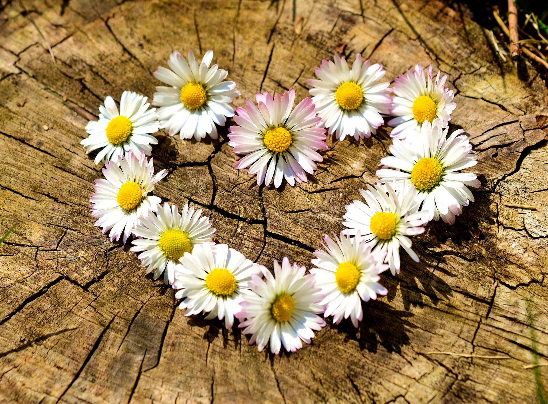 znamení rak a láska vztahy partnerství