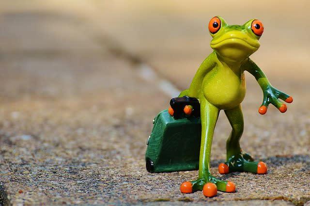 Odcházející žába