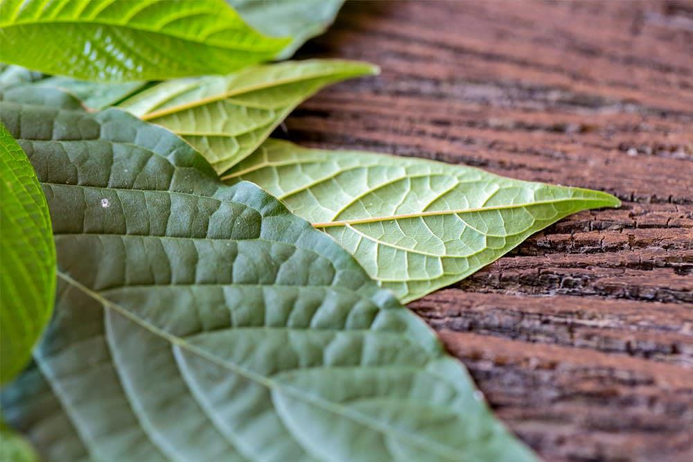 Edible Tree Leaves