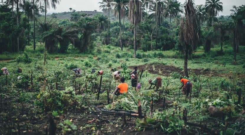 Farmers working against a backdrop of palm trees and forest