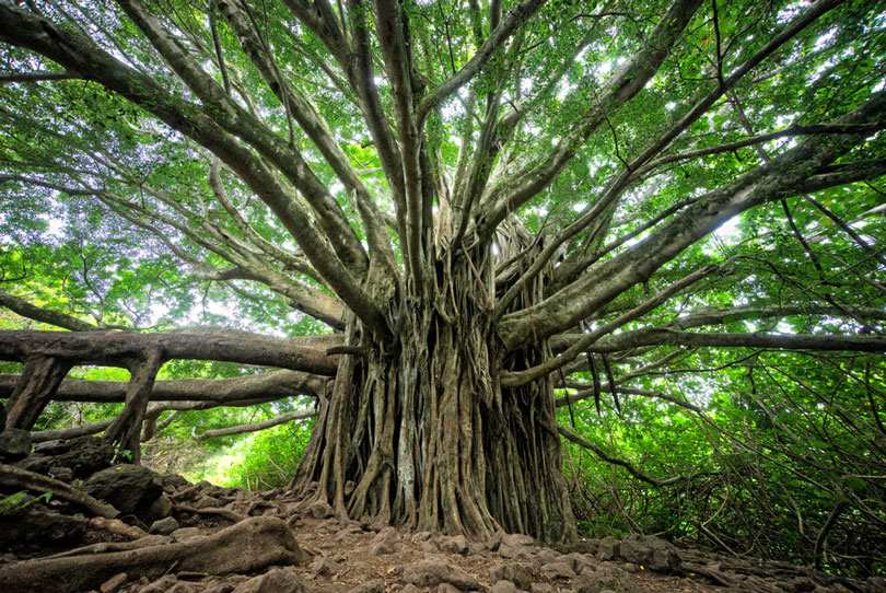The Tree of Power