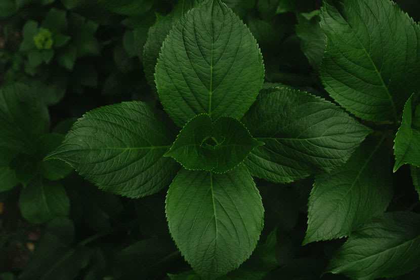 Deep Green Leaves