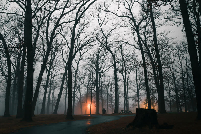 Missouri woods during a winter morning