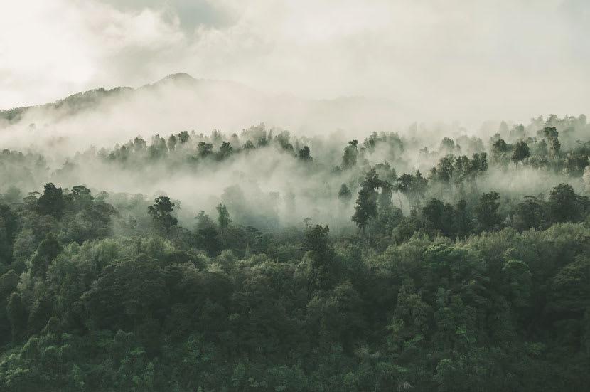 Fog rising over a rainforest