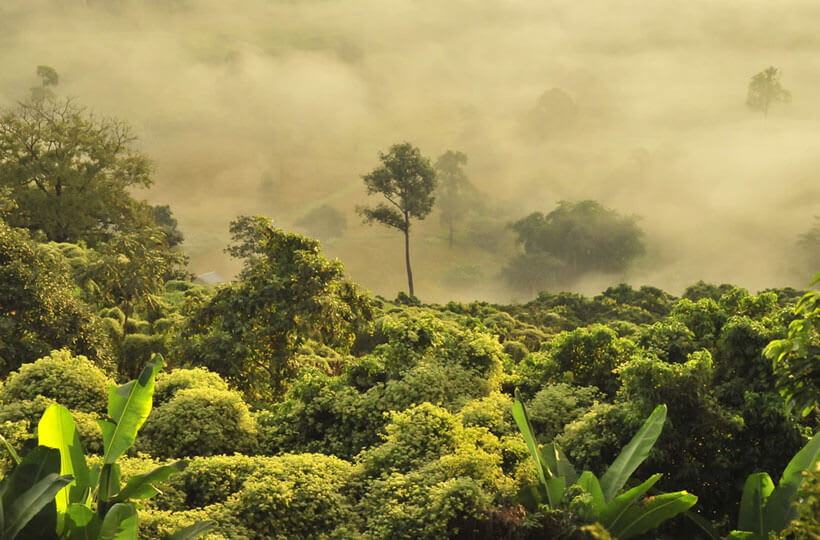 Foggy Rainforest in Southeast Asia