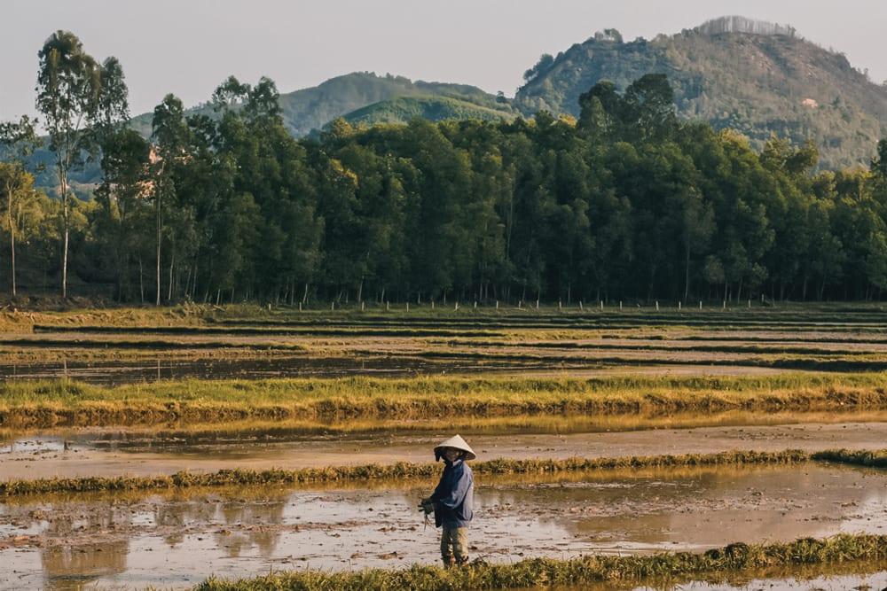 Vietnam Kratom