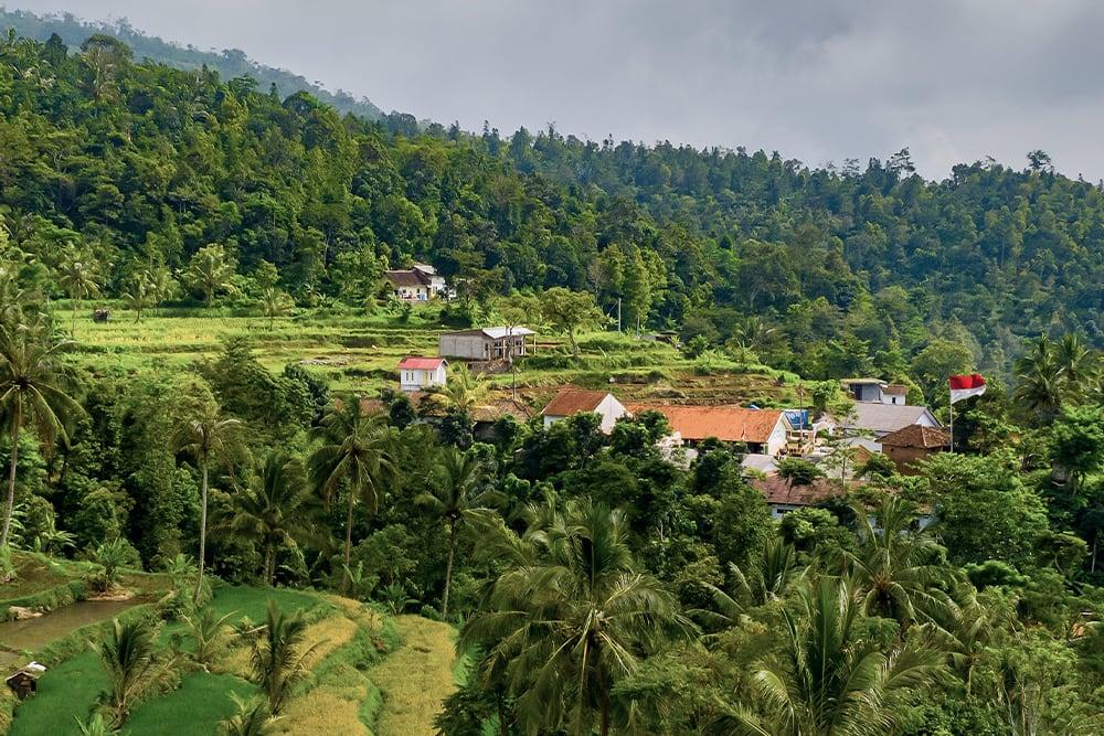 Indonesian Kratom Ban 2021