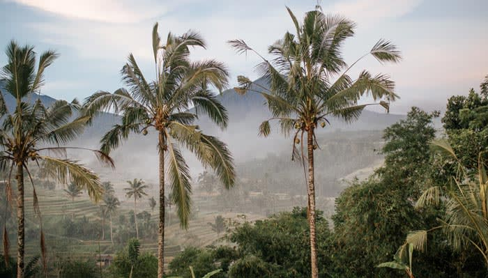 Palm trees in front of a landscape filled with green trees and plants