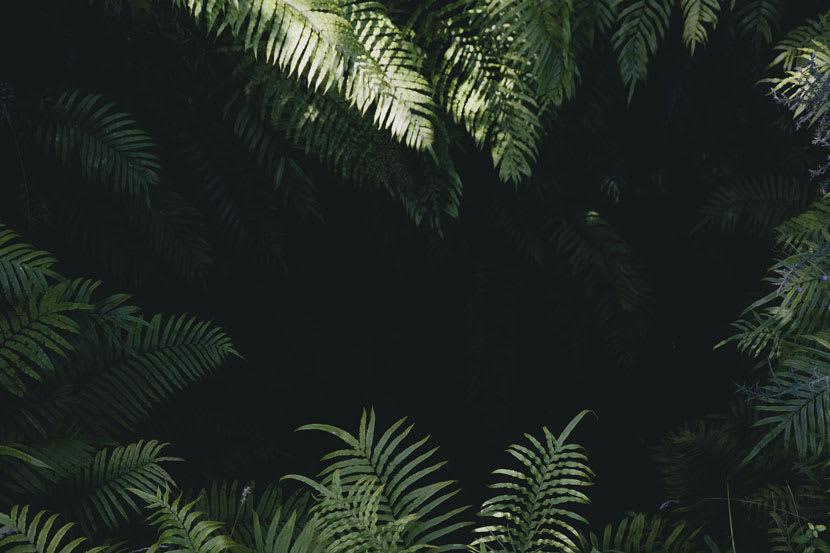Leafy green foliage