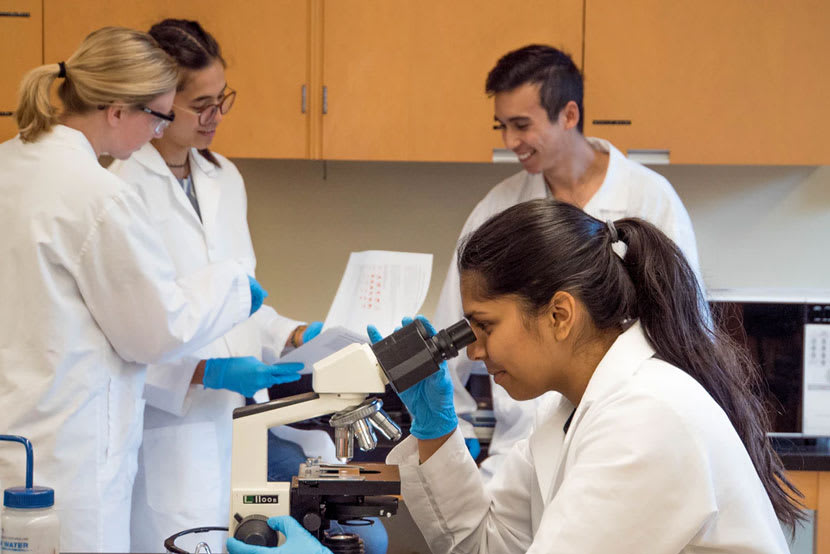 A group of lab technicians conducting analysis