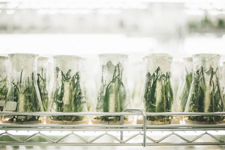 A series of green plants in glass beakers