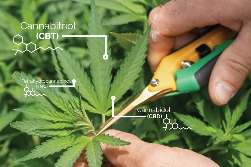 What is Cannabitriol?
