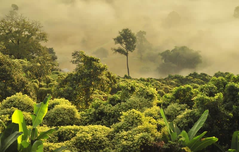 A fog rises over a Thai rainforest