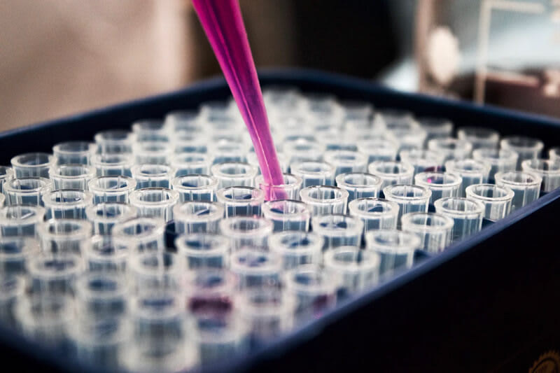 A pipette filled with pink liquid filling a collection of tubes