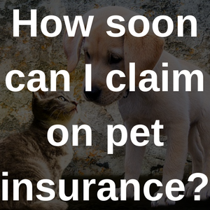 how soon can I claim on pet insurance?