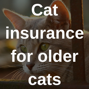 cat insurance for older cats