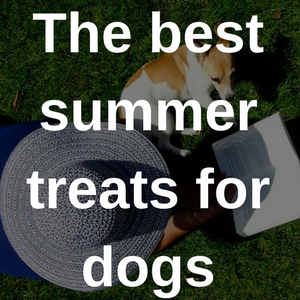 the best summer treats for dogs
