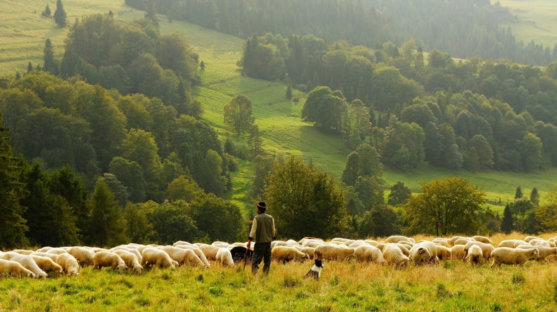 Fête des Bergers dans les Pyrénées