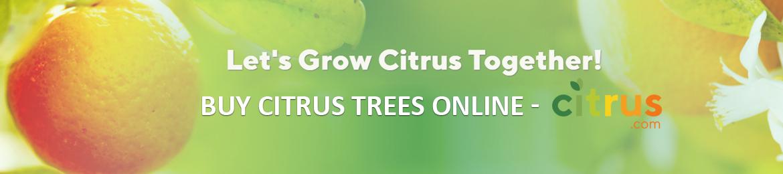 Buy Citrus trees online
