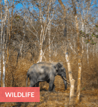 wildlife resorts