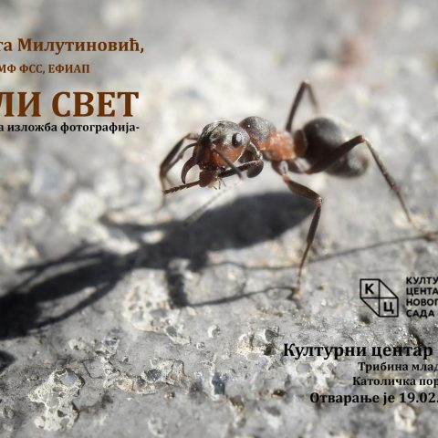 """Izložba fotografija """"Mali svet"""" autorke Violete Milutinović"""