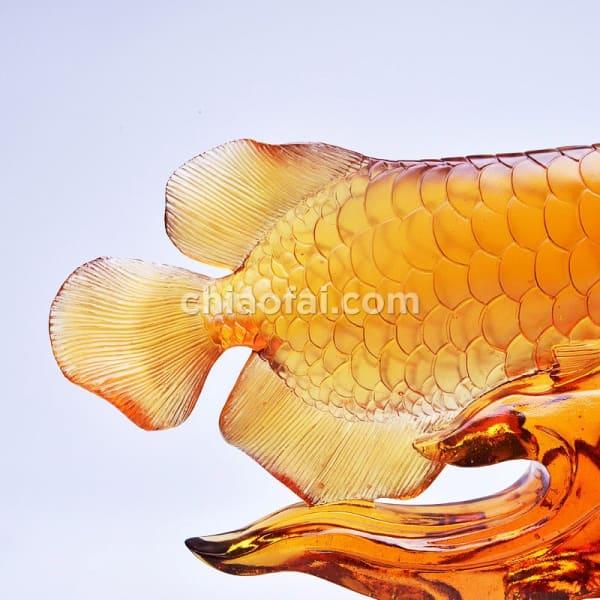 金龍魚2 5