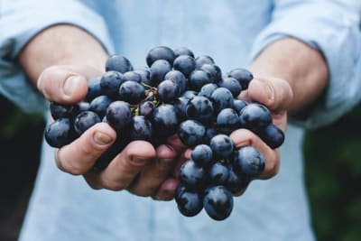 grapes sharpen brain function