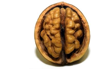 walnuts for brain activity