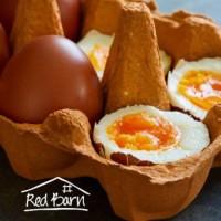 Jumbo Eggs Dozen