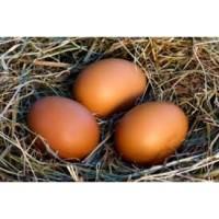 Free Range Eggs Dozen Mix...