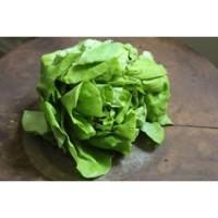 Butter Lettuce 150g