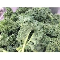 Curly leave Kale Bunch