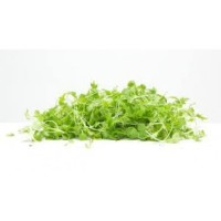 Mix Lettuce Pack 150g